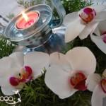 Organizzazione Eventi e Cene - Pepe Rosa Eventi