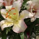 I nostri fiori - Pepe Rosa Eventi