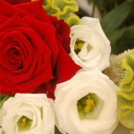 I nostri fiori freschissimi - Pepe Rosa Eventi