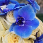 Bouquet di rose e orchidee blu - Pepe Rosa Eventi